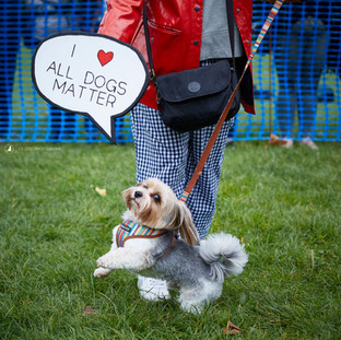 E5 Dog Photography - All Dogs Matter - 38