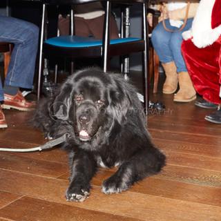 Santa Paws Doggy Brunch 2017 - 15