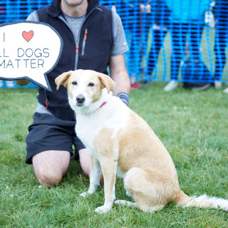 E5 Dog Photography - All Dogs Matter - 33
