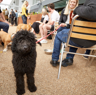 Dog's Day Out at the Shane Canal Side - 02