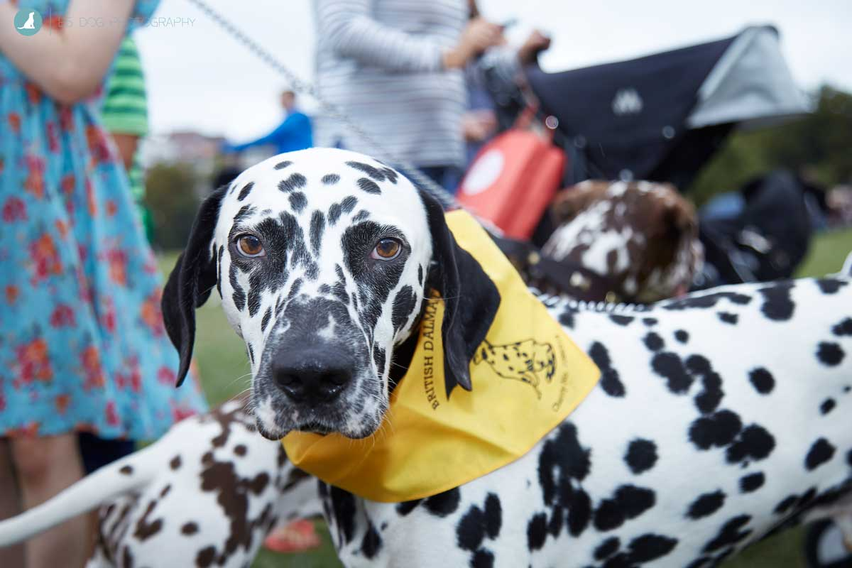 E5_Dog_Photography_PupAid_Primrose_Hill_2016_018