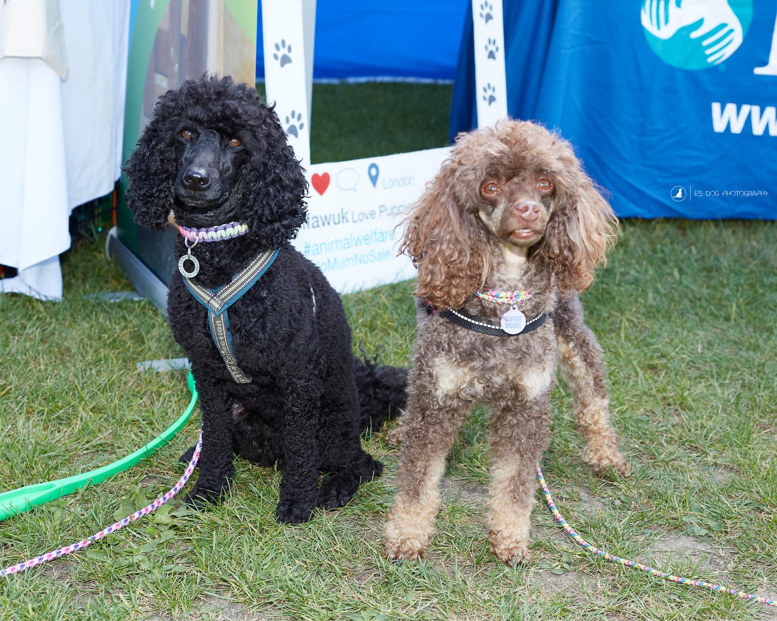 Dog Show Victoria Bc