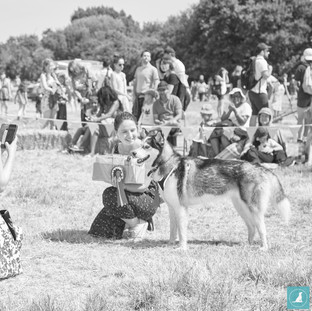 E5_Dog_Photography_1959.jpg