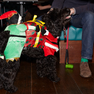 Santa Paws Doggy Brunch 2017 - 10