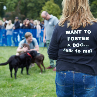 E5 Dog Photography - All Dogs Matter - 23