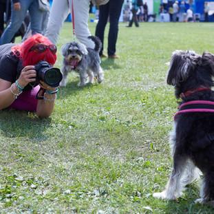E5 Dog Photography - PupAid 2017