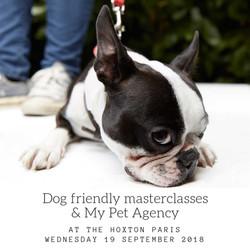 Dog friendly masterclasses