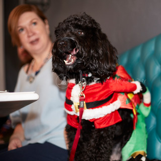 Santa Paws Doggy Brunch 2017 - 42