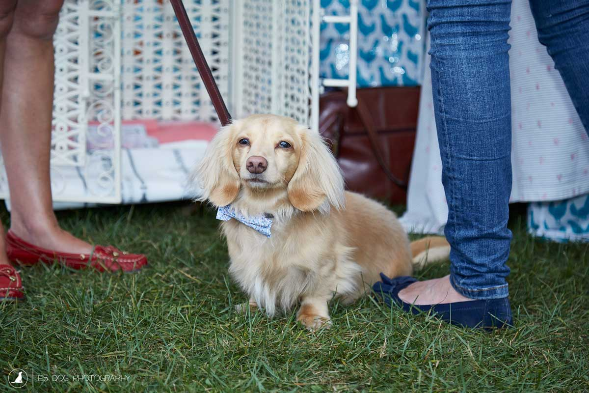 E5_Dog_Photography_PupAid_Primrose_Hill_2016_019