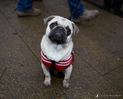 E5_Dog_Photography_Valentine2017_All_Dogs_Matter6