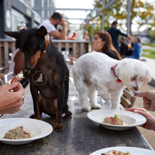 Dog's Day Out at the Shane Canal Side - 11