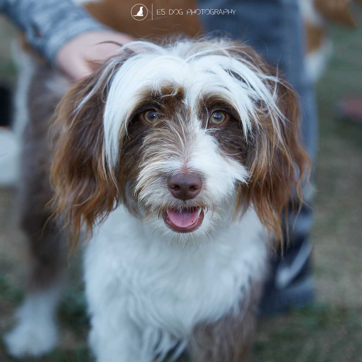 E5_Dog_Photography_PupAid_Primrose_Hill_2016_040