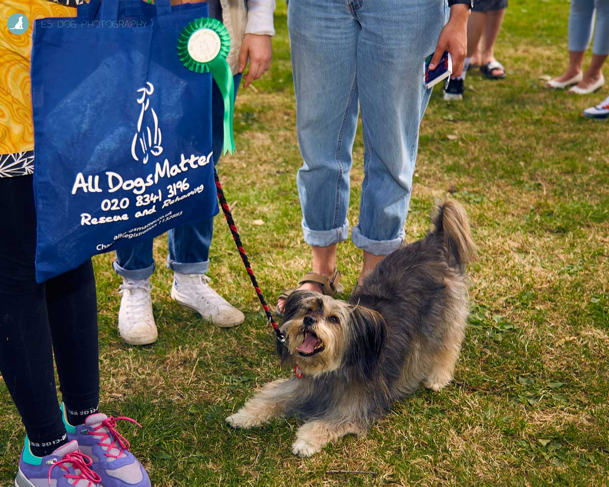 E5-Dog-Photography-All-Dogs-Matter-Visions-Festival-Hackney-2016-46