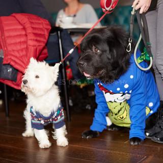 Santa Paws Doggy Brunch 2017 - 39