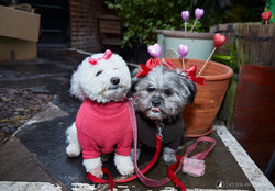 E5_Dog_Photography_Valentine2017_All_Dogs_Matter31
