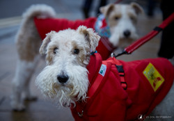 E5_Dog_Photography_Valentine2017_All_Dogs_Matter23