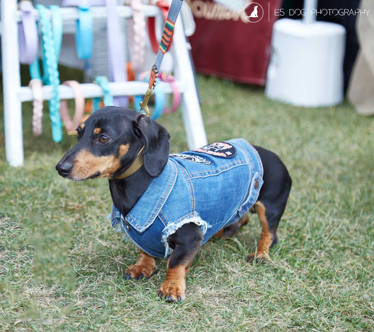 E5_Dog_Photography_PupAid_Primrose_Hill_2016_021