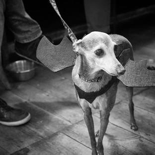 E5_Dog_Photography_2886.1.jpg