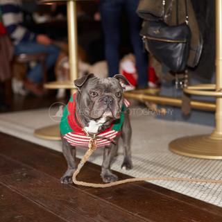 Santa Paws Doggy Brunch 2017 - 28