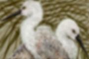2012heron test nutral background.jpg