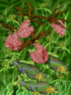 KOI ORCHIDS.jpg