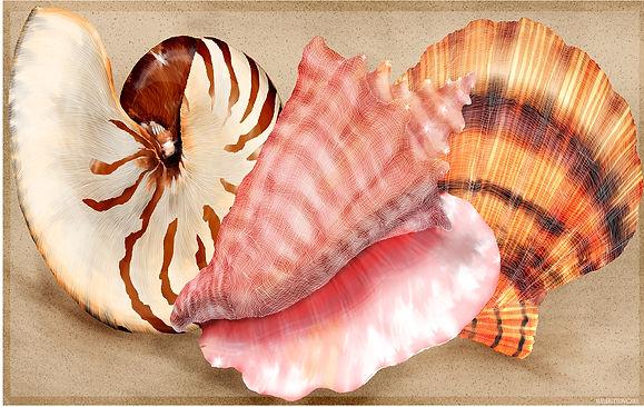 shells on the beach card.jpg