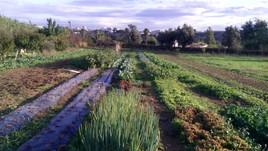 Uma horta biológica mesmo pertinho de si, aqui em Leça do Balio