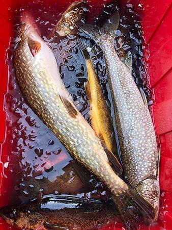 Davin Lake Fishing Lodge Northern Pike, Walleye, Lake Trout