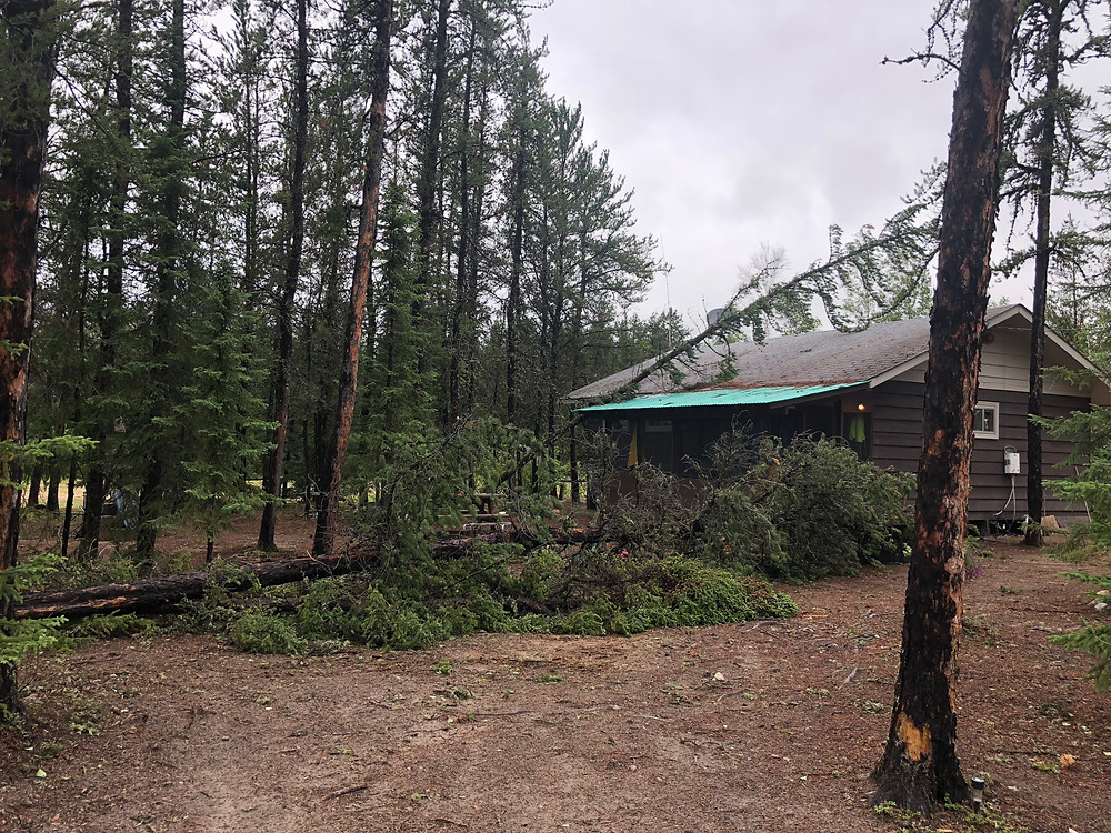 only a few of the trees down in and around camp...yes, that is my cabin!