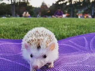 Indoor yoga practice? Reconsider! Outdoor yoga is more alluring