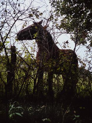 Cavalier sur cheval de bois - 06