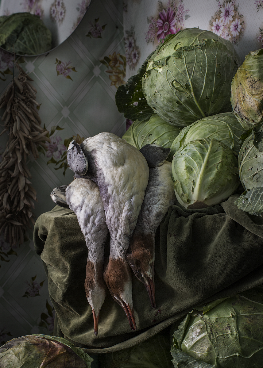Ducks and cabbage