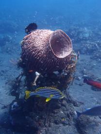 underwater lifeTulamben