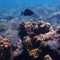 Coral Garden  Tulamben