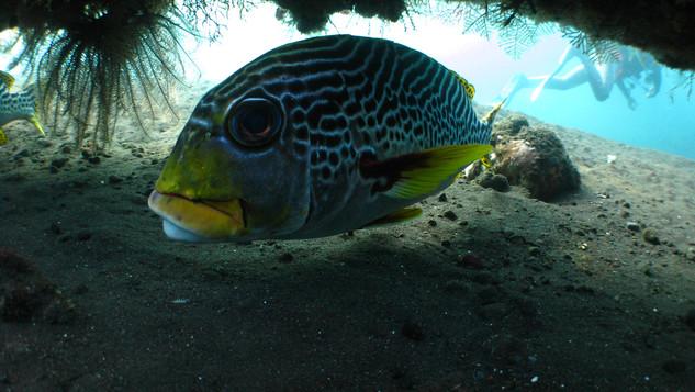diving in bali Menjangan