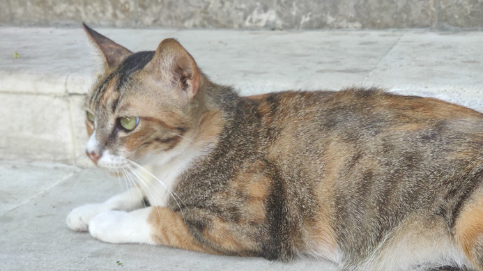 Bali Breizh Divers' cat