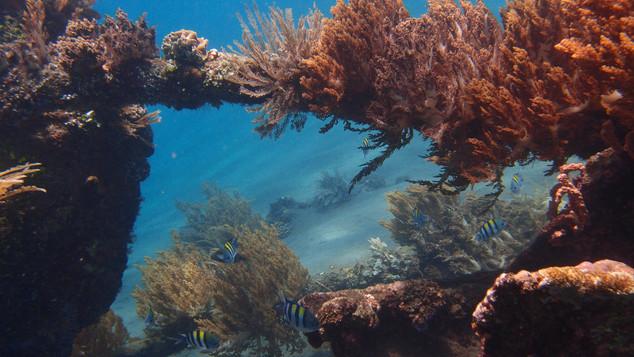 Lipah bay underwater