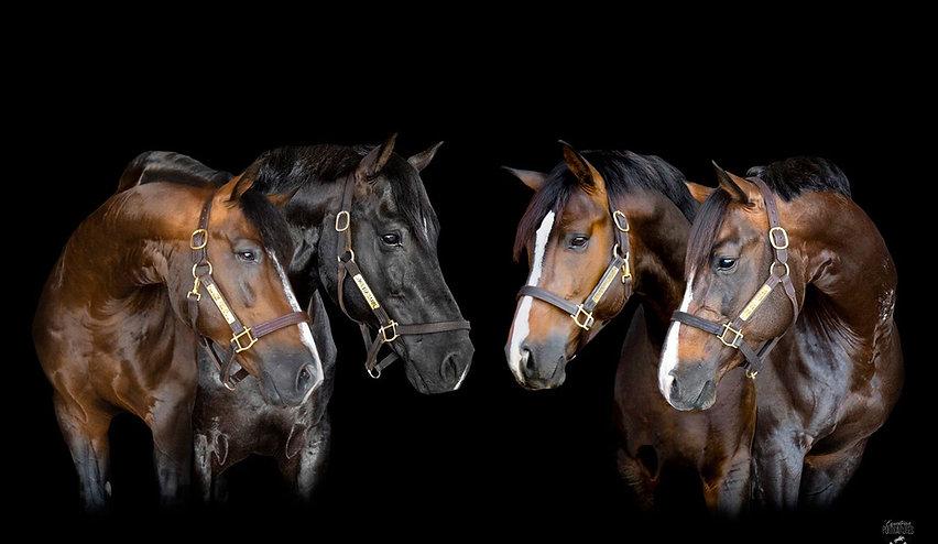 MF Four Stallions looking center.jpg
