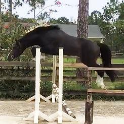 Pax-jump-chute-narrow.jpg