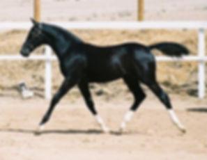 Raven as foal2.jpg