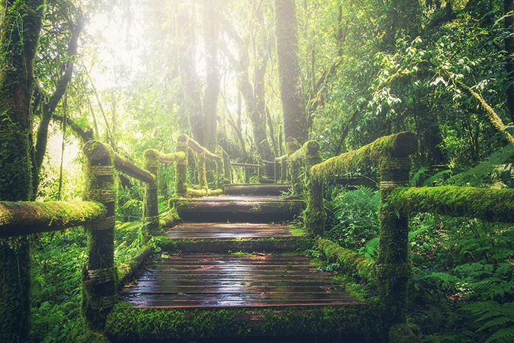 wooden bridge covered with moss in the forest