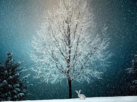 6 True Stories to Brighten Your Holiday Spirit