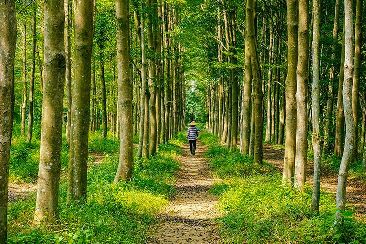 man walking down a forrest path