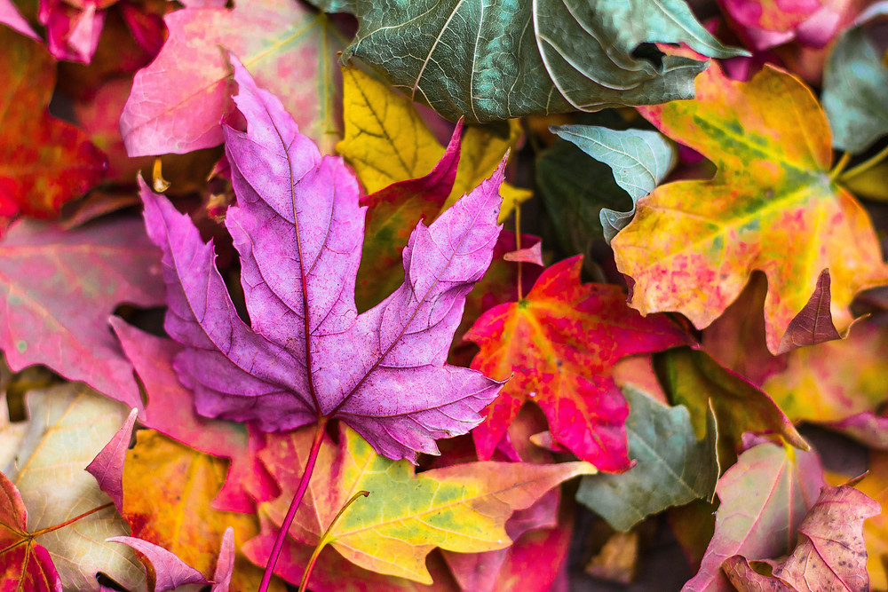 purple, red, green, and orange leaves