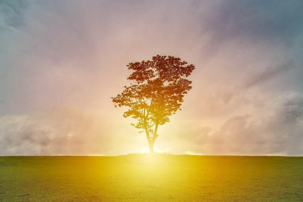 tree in a field with the sun setting behind it in a cloudy sky