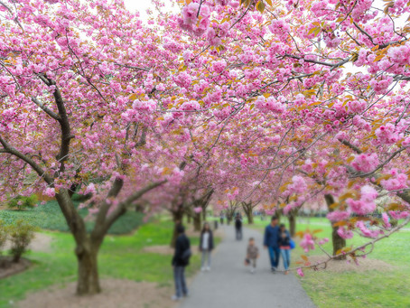 SPRING: TRANSFORMATIONS IN NATURE AND OURSELVES