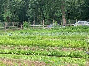 Farm crops growing in a field