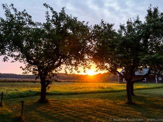 Sunrise and trees (1 av 1).jpg