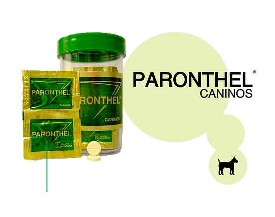 Paornthel-Caninos.png