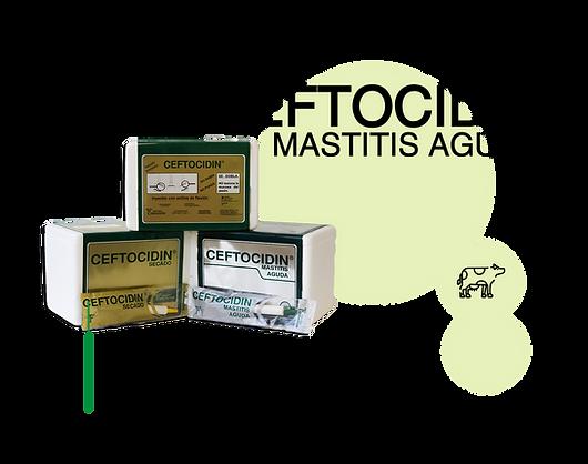 Ceftocidin-Mastitis-Aguda.png